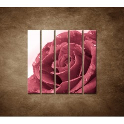 Ruža s rosou - 5dielny 100x100cm