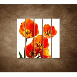 Oranžové tulipány - 5dielny 100x100cm