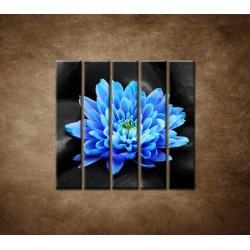 Obrazy na stenu - Modrý kvet na kameňoch - 5dielny 100x100cm