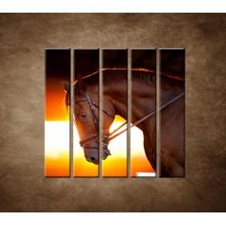 Obrazy na stenu - Kôň v stajni - 5dielny 100x100cm