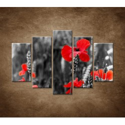 Obrazy na stenu - Červené vlčie maky - 5dielny 150x100cm