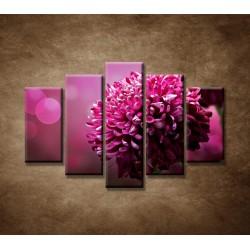 Obrazy na stenu - Kvetinové pozadie - 5dielny 150x100cm