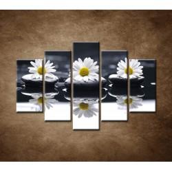 Obrazy na stenu - Tri sedmokrásky - 5dielny 150x100cm