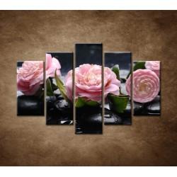 Obrazy na stenu - Kvety kamélie a kamene - 5dielny 150x100cm