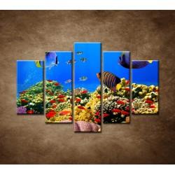 Obrazy na stenu - Podmorský svet - 5dielny 150x100cm