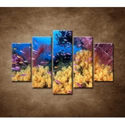 Obrazy na stenu - Korálový útes - 5dielny 150x100cm