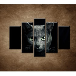 Obrazy na stenu - Pohľad mačky - 5dielny 150x100cm