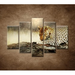 Obrazy na stenu - Odpočívajúci leopard - 5dielny 150x100cm