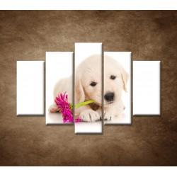 Obrazy na stenu - Psík s kvetom - 5dielny 150x100cm
