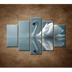 Obrazy na stenu - Labuť - 5dielny 150x100cm
