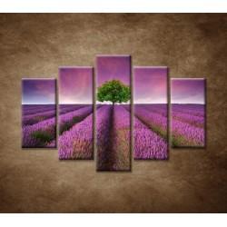 Obrazy na stenu - Levanduľové pole - 5dielny 150x100cm