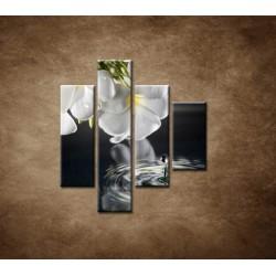 Obrazy na stenu - Biely kvet nad vodou - 4dielny 80x90cm