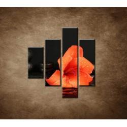 Obrazy na stenu - Gladiól a kamene - 4dielny 80x90cm