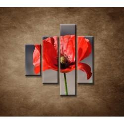 Obrazy na stenu - Vlčí mak - 4dielny 80x90cm