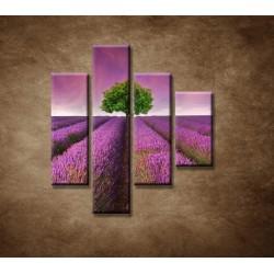 Obrazy na stenu - Levanduľové pole - 4dielny 80x90cm