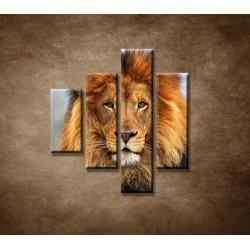 Obrazy na stenu - Leví kráľ - 4dielny 80x90cm