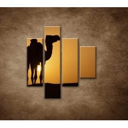 Obrazy na stenu - Ťava na Sahare - 4dielny 80x90cm
