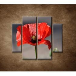 Obrazy na stenu - Vlčí mak - 4dielny 100x90cm