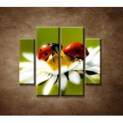 Obrazy na stenu - Lienky na kvete - 4dielny 100x90cm
