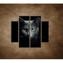 Obrazy na stenu - Pohľad mačky - 4dielny 100x90cm