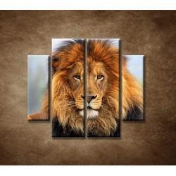 Obrazy na stenu - Leví kráľ - 4dielny 100x90cm