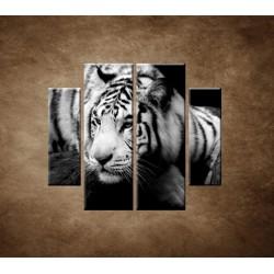 Obrazy na stenu - Sibírsky tiger - 4dielny 100x90cm