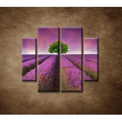 Obrazy na stenu - Levanduľové pole - 4dielny 100x90cm