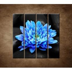 Obrazy na stenu - Modrý kvet na kameňoch - 4dielny 120x120cm