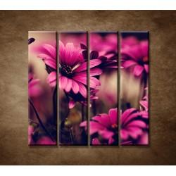 Obrazy na stenu - Ružové gerbery - 4dielny 120x120cm