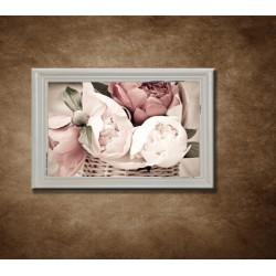 Obraz na stenu - Pivonka zblízka - bledý rám