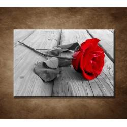 Obraz na stenu - Červená ruža