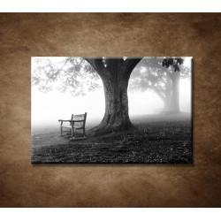 Obrazy na stenu - Park v hmle