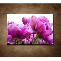 Obrazy na stenu - Tulipánové zátišie