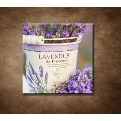 Obrazy na stenu - Levanduľa v kvetináči