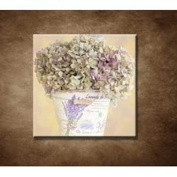 Hortenzia v kvetináči
