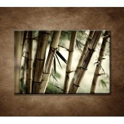 Obrazy na stenu - Bambusový les