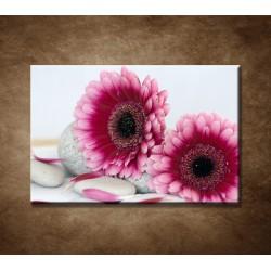 Obrazy na stenu - Ružové gerbery a kamene