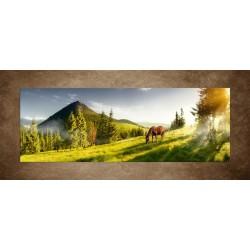 Kôň na pastvine