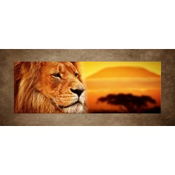 Lev v Afrike