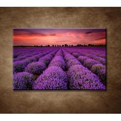 Obrazy na stenu - Krajina s levanduľou
