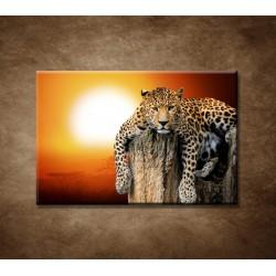 Obrazy na stenu - Leopard