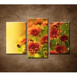 Obrazy na stenu - Jesenné chryzantémy - 3dielny 75x50cm