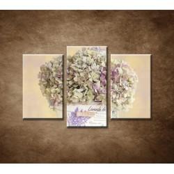 Obrazy na stenu - Hortenzia v kvetináči - 3-dielny 75x50cm