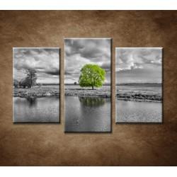 Obrazy na stenu - Zelený strom - 3-dielny 75x50cm