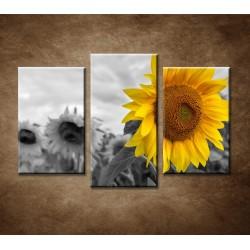 Obrazy na stenu - Žltá slnečnica - 3-dielny 75x50cm