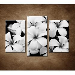 Obrazy na stenu - Pluméria - 3-dielny 75x50cm