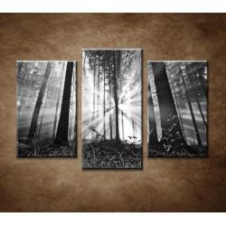 Obrazy na stenu - Les - 3-dielny 75x50cm