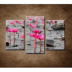 Obrazy na stenu - Lotosové pole - 3dielny 75x50cm