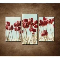 Obrazy na stenu - Retro tulipány - 3-dielny 75x50cm