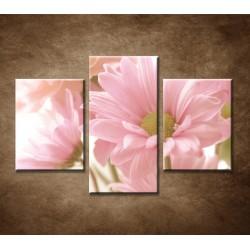 Obrazy na stenu - Ružová gerbera - 3dielny 90x60cm